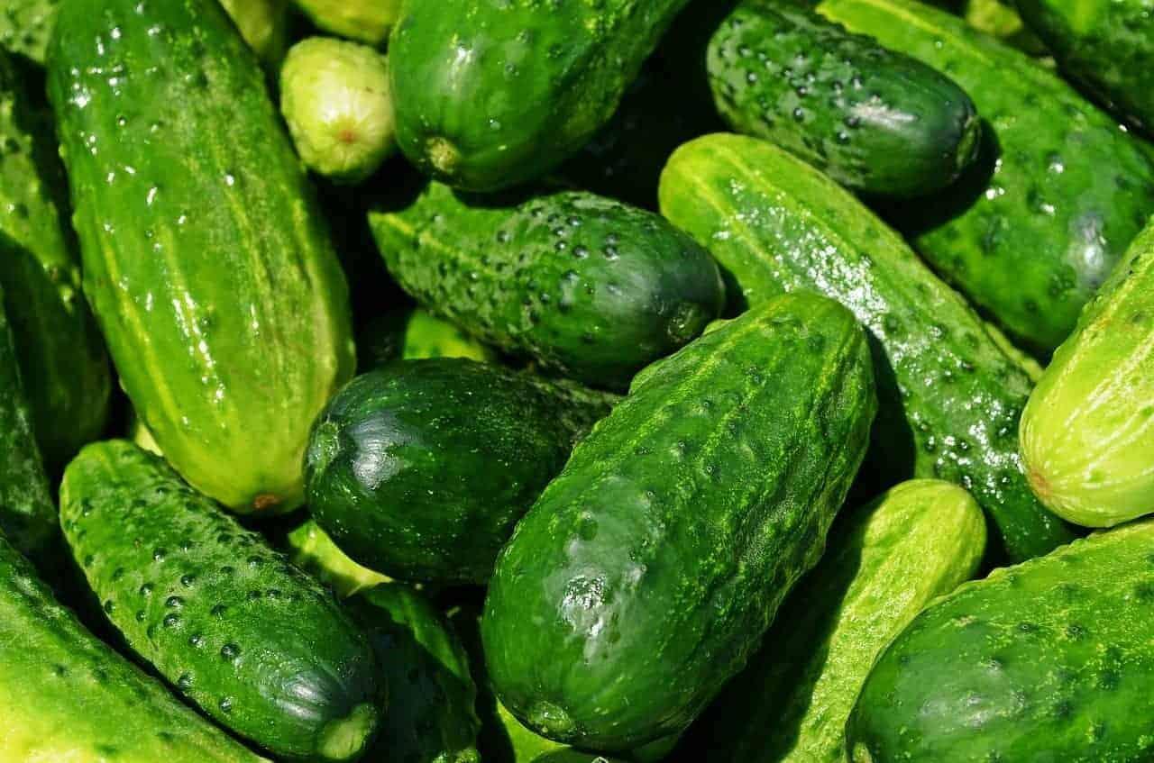 fresh cucumbers.
